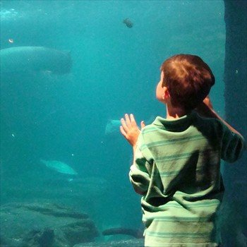 Dallas World Aquarium Boy Watching Fish