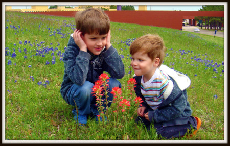 2 boys around Indian paintbrush in bluebonnet field
