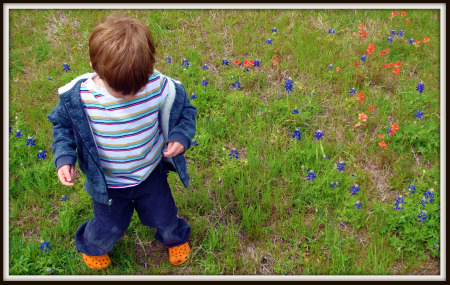 boy in Texas bluebonnets