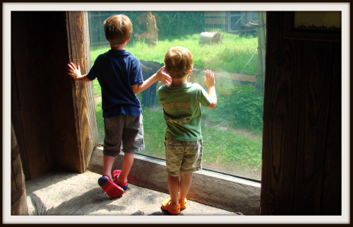 Reid and Rhett looking at black bear