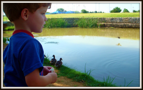 Rhett attempting to feed ducks
