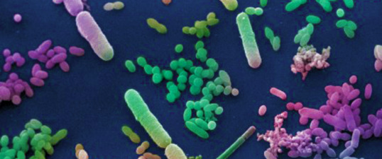 bacteria FEAT