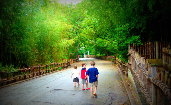 Three boys walk in rain on zoo path