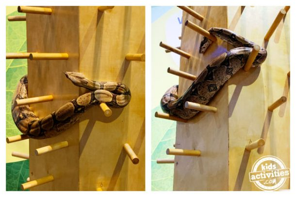 Real snake pictues - inspiration for snake craft