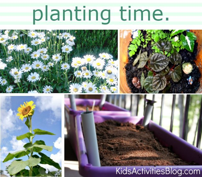 Planting seeds with children