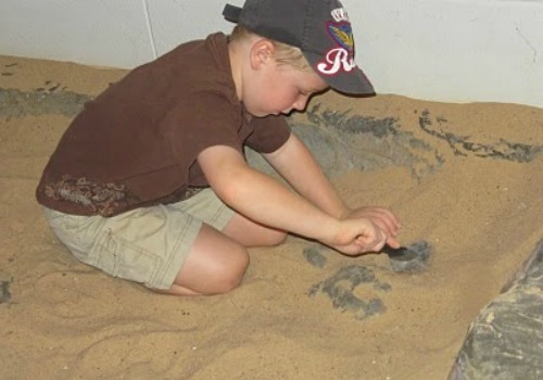 little boy on fossil dig