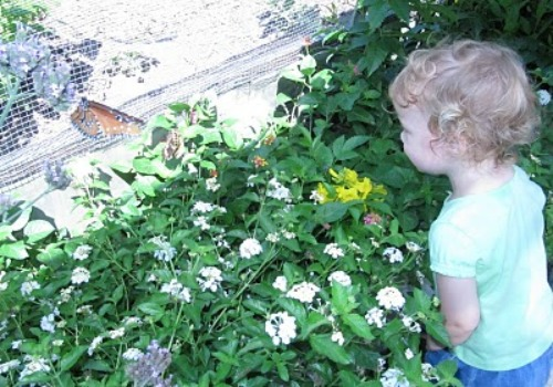 little girl looking at butterfly