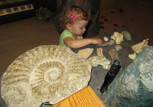 little girl looking at fossils