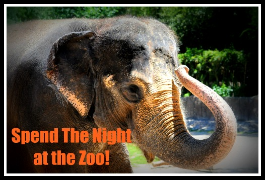 Spend the Night at The Zoo