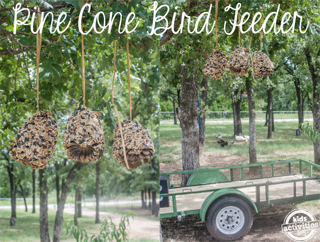 pine cone bird feeder text
