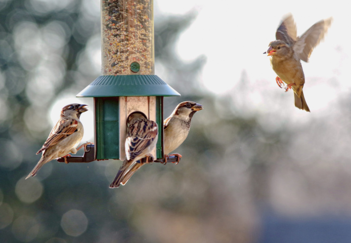Feed the birds on Earth Day - Kids Activities Blog