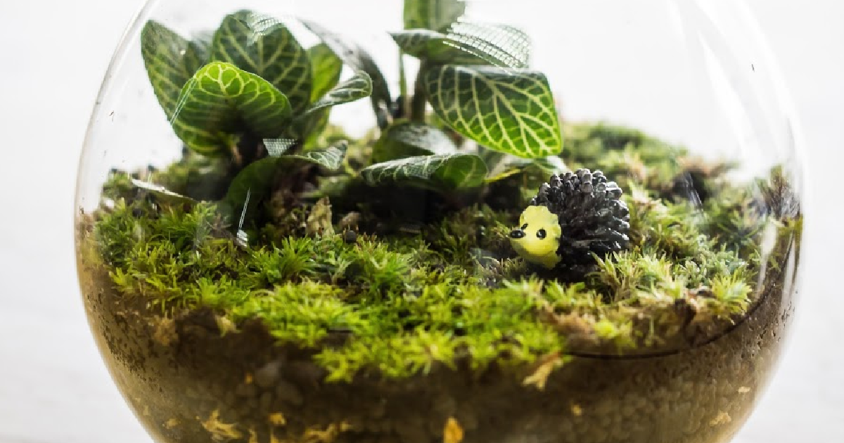 You Can Make A Terrarium Your Kids Will Love Here S How