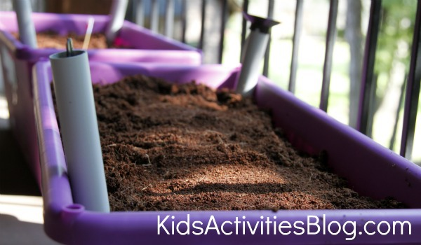 kids container garden to grow