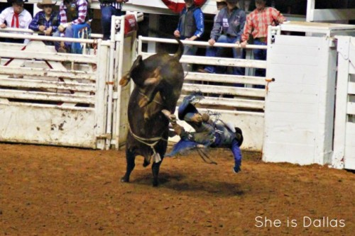 Fort Worth Stock Show and Rodeo Bull Riding