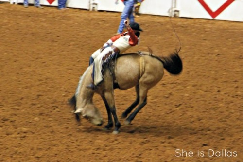 Fort Worth Stock show bucking bronco