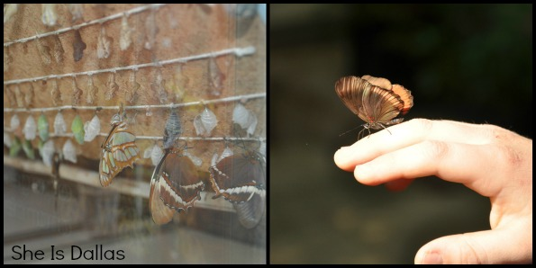 butterfly house collage