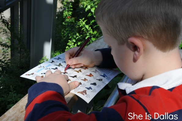 butterfly scavenger hunt at Texas Discovery Gardens
