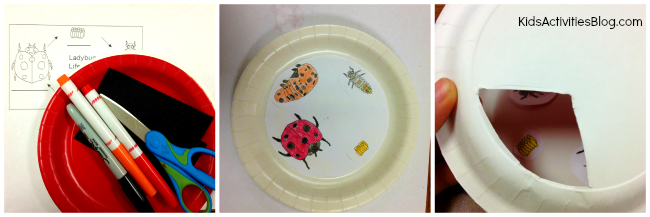 This cute science craft helps kids understand the ladybug life cycle