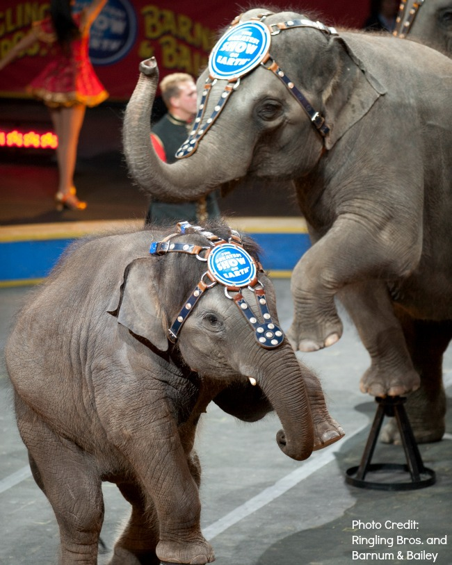 Elephants at Ringling Brothers Barnum and Bailey Circus