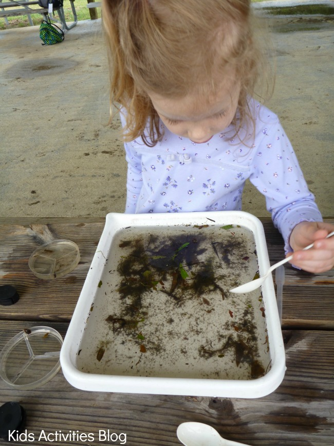 Discovering Pond Life