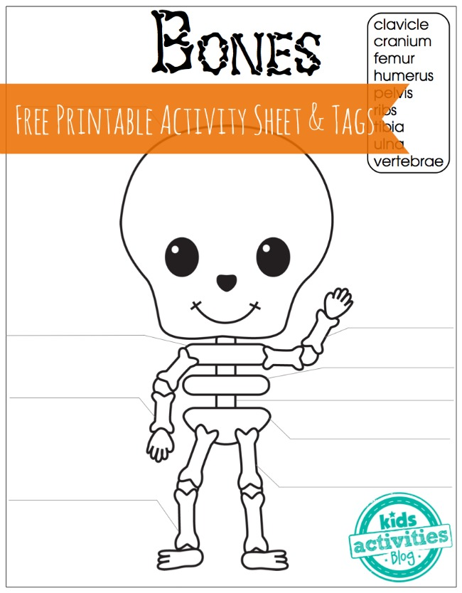 "Skeleton Bones Free Printable Activity Sheet and Tags for Kids. A smiling skeleton has blanks to be filled in for each of the words in the word bank, above its head. ""clavicle"" ""cranium"" ""femur"" ""humerus"" ""pelvis"" ""ribs"" ""tibia"" ""ulna"" ""Vertebrae"""