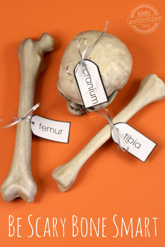 "on an orange background, two bones and a skull sit. They are labeled with white labels with black text that say ""femur"", ""cranium"", and ""tibia"""