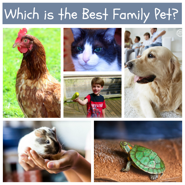 Best Pets for Families with Kids