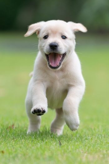 Covered in Puppies Video - Kids activities blog - puppy running