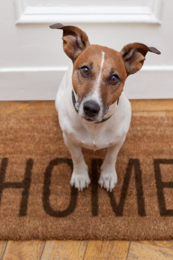 Soldier Returns Home Video - Kids Activities Blog - dog sitting on a HOME mat