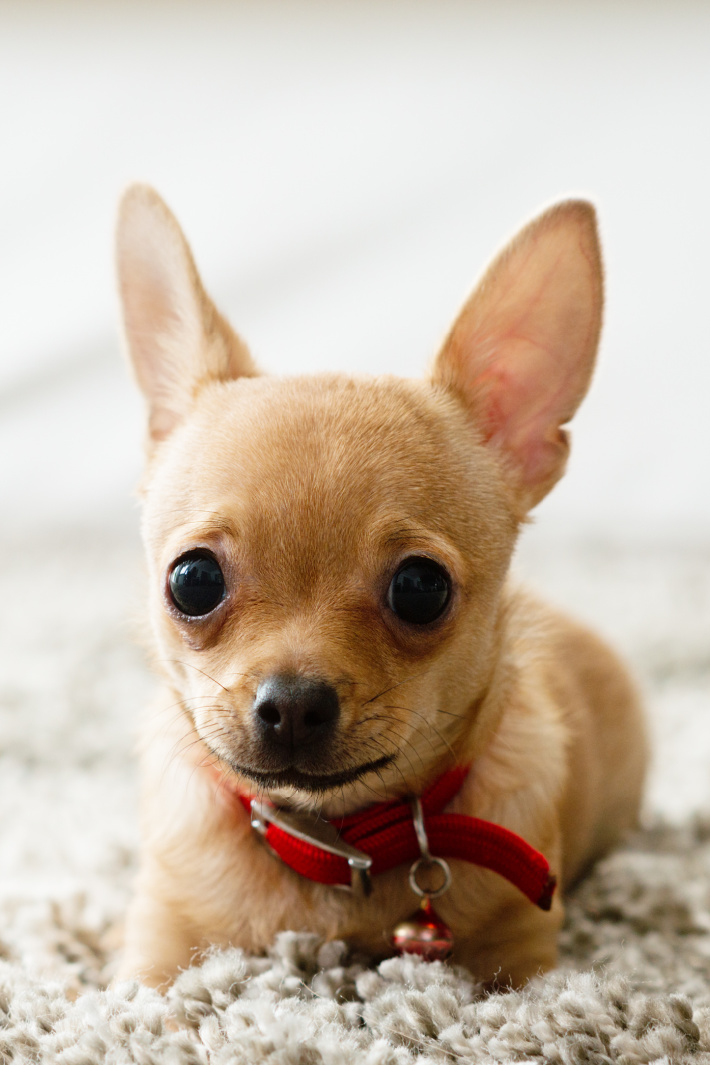 These Tiny Animals Have Big Personalities! [Video]