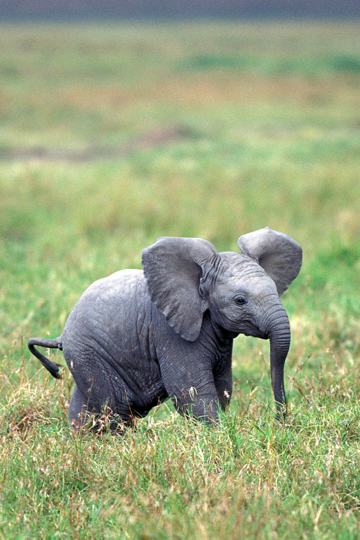 A Baby Is A Baby…Watch this Baby Elephant Sleep! [Video]