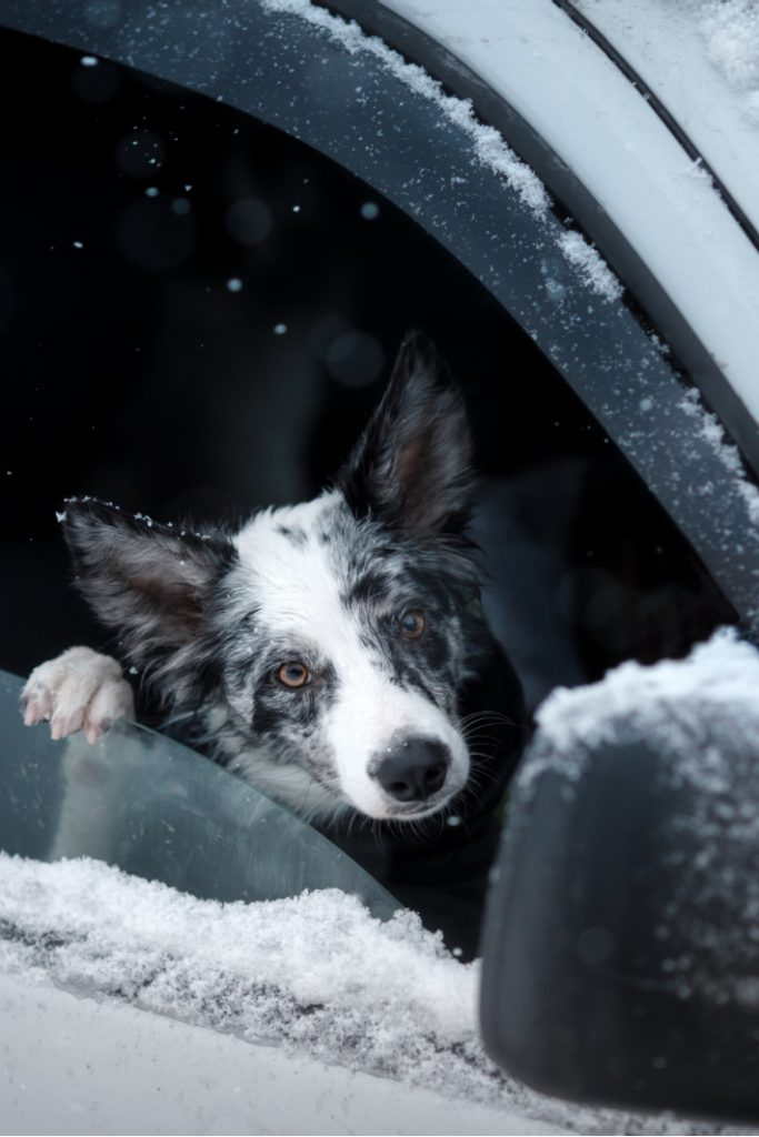 Snow removal from car videos - Kids Activities Blog