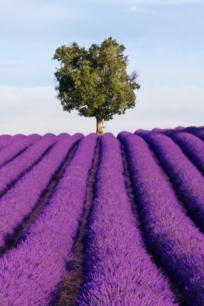 How to Use Lavender Essential Oil