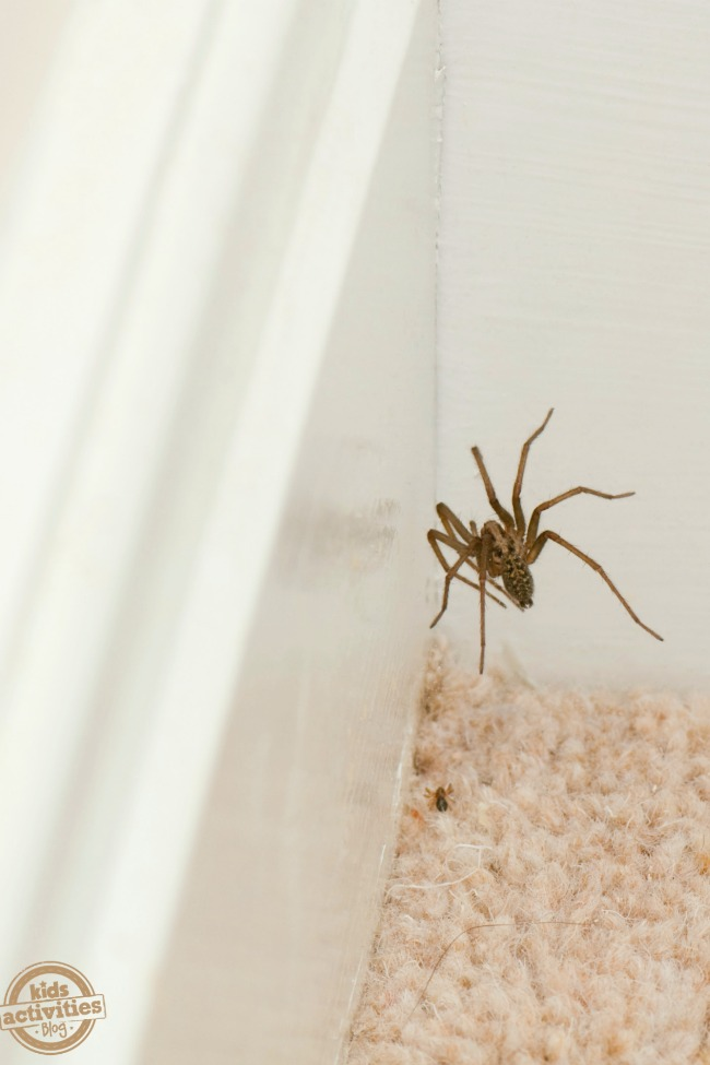 Easy DIY Natural Spider Repellent Spray to Keep Spiders Away