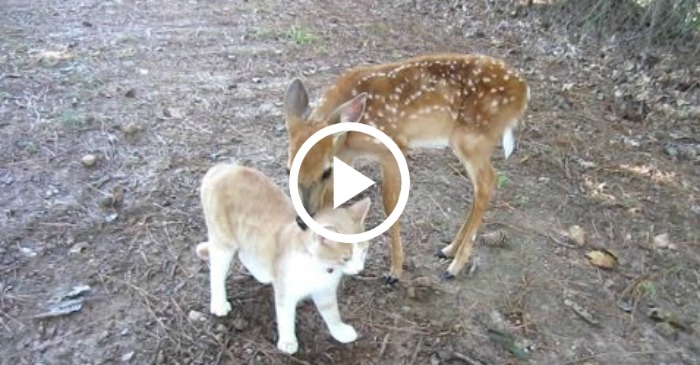 cat and deer best friends