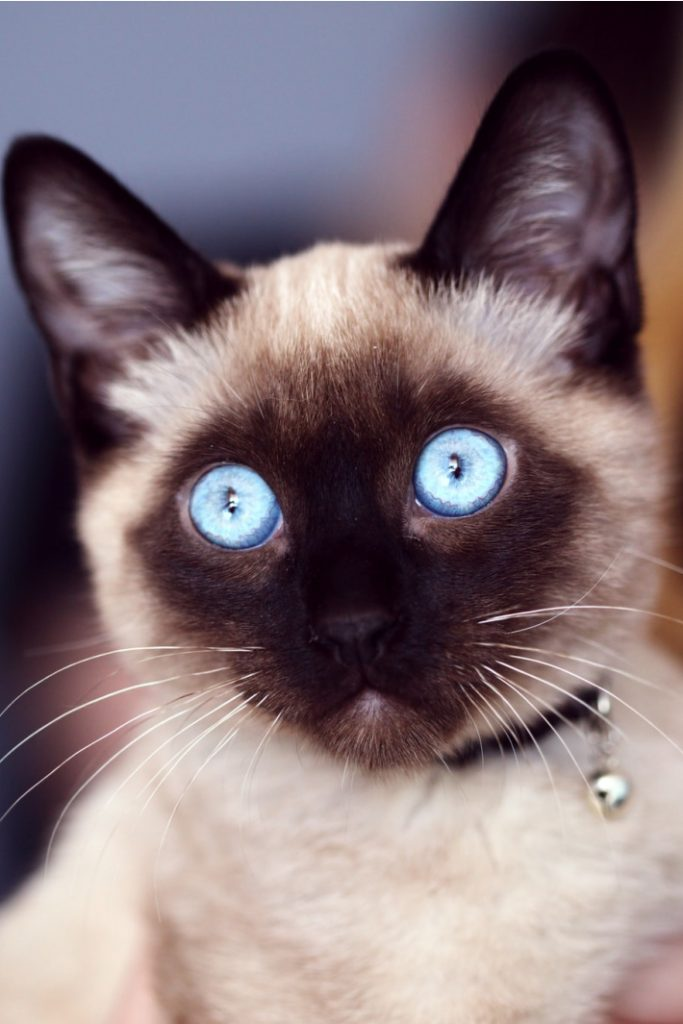 Funniest Cat Video Ever as Declared by Kids Activities Blog
