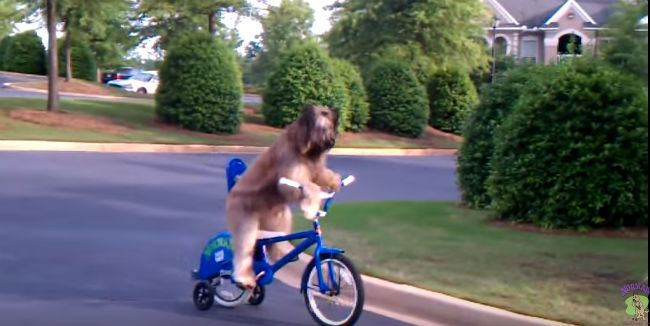 dog riding bike screenshot from video of dog who can ride a bike with training wheels