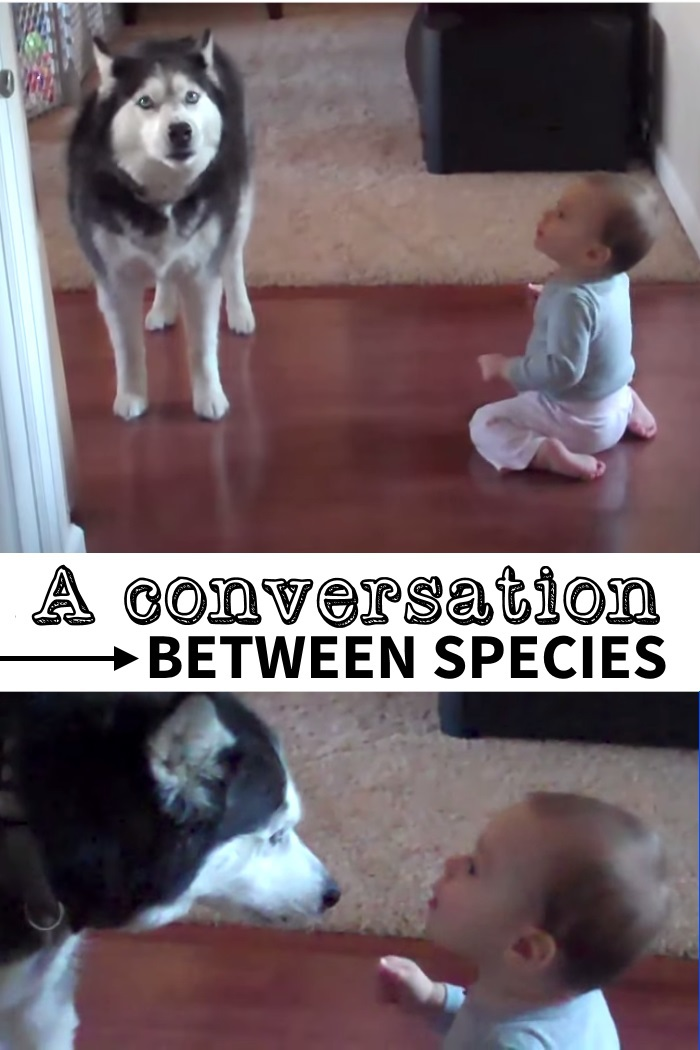 talking dog with baby2