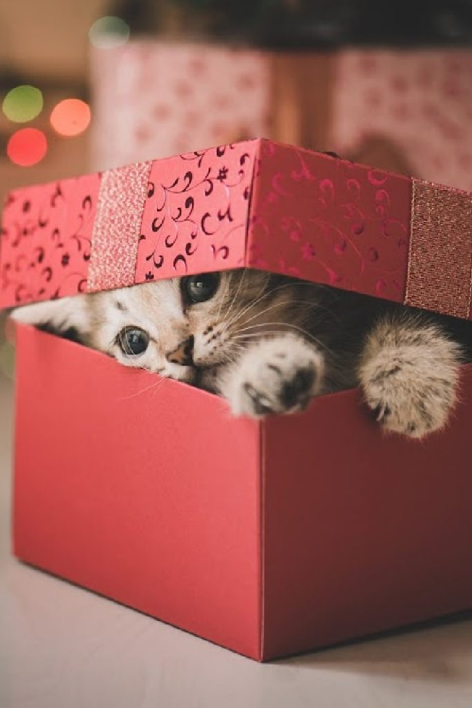 Funny Video cat in Christmas present - Kids Activities Blog Feature
