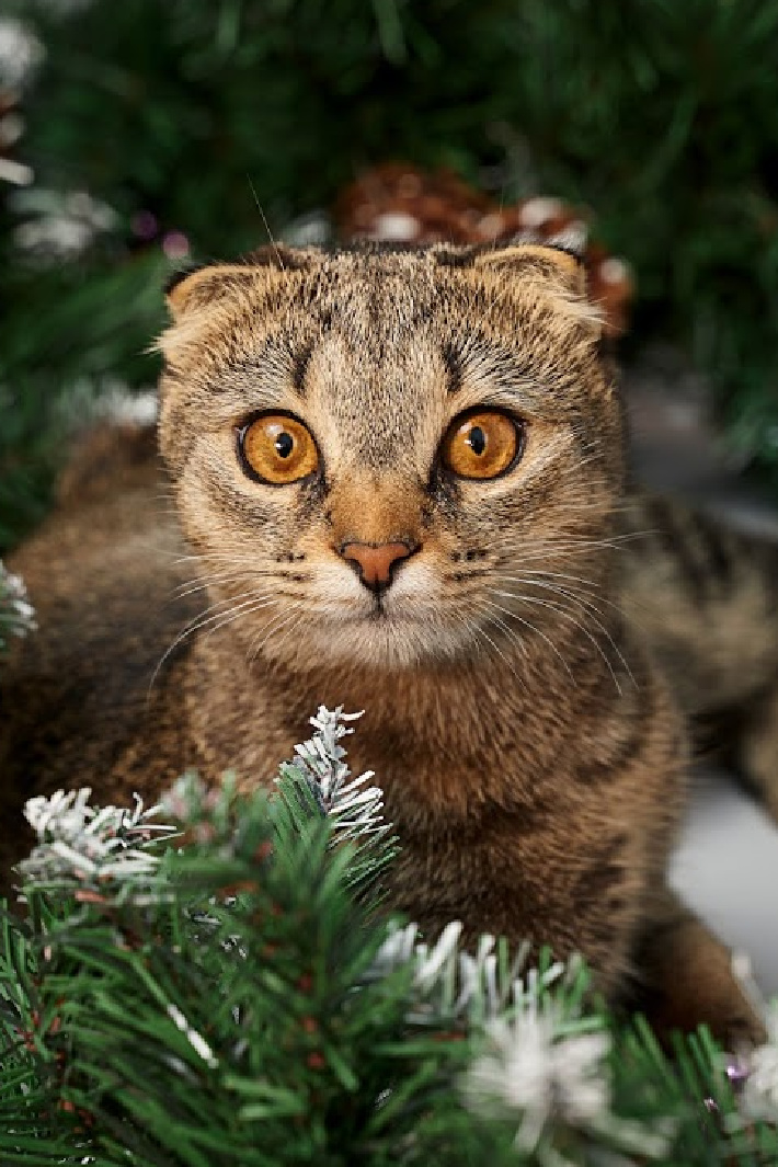 This Kitten Loves To 'Help' Decorate The Christmas Tree [Video]