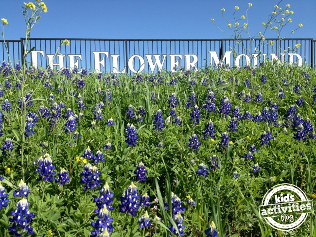 The Flower Mound in Flower Mound Texas