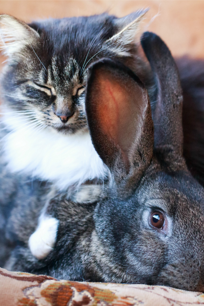 cat approaches this bunny