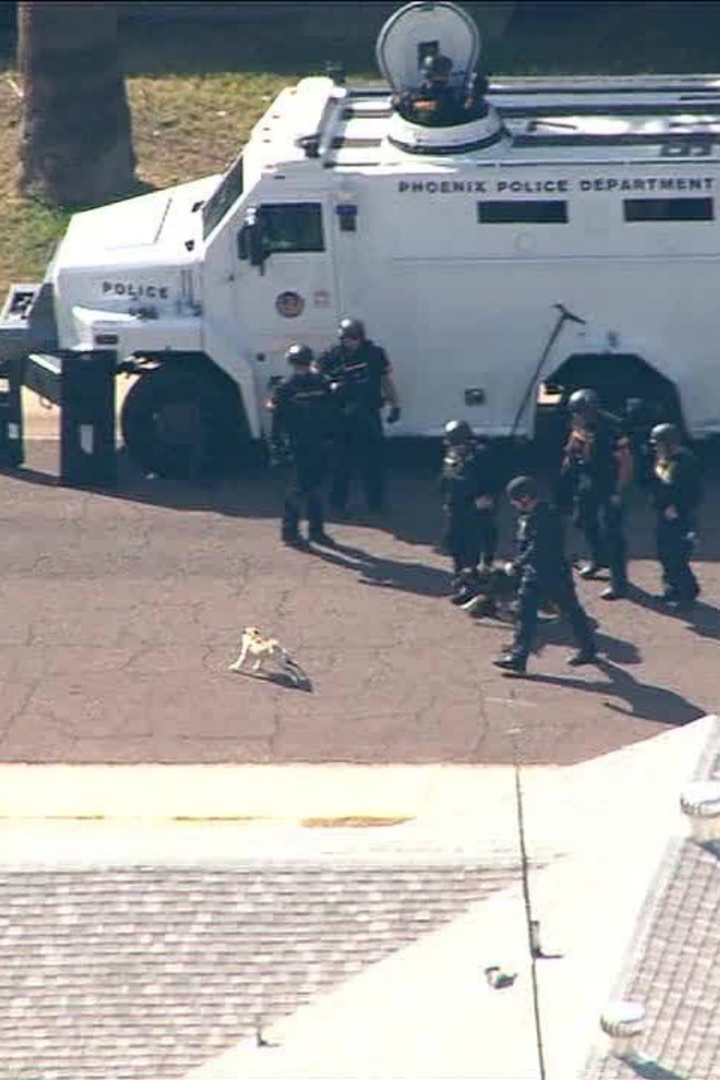 Pug Picks A Fight With Police Dog, And Entire Swat Team