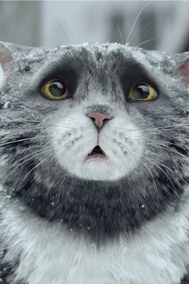 cat saves family on Christmas