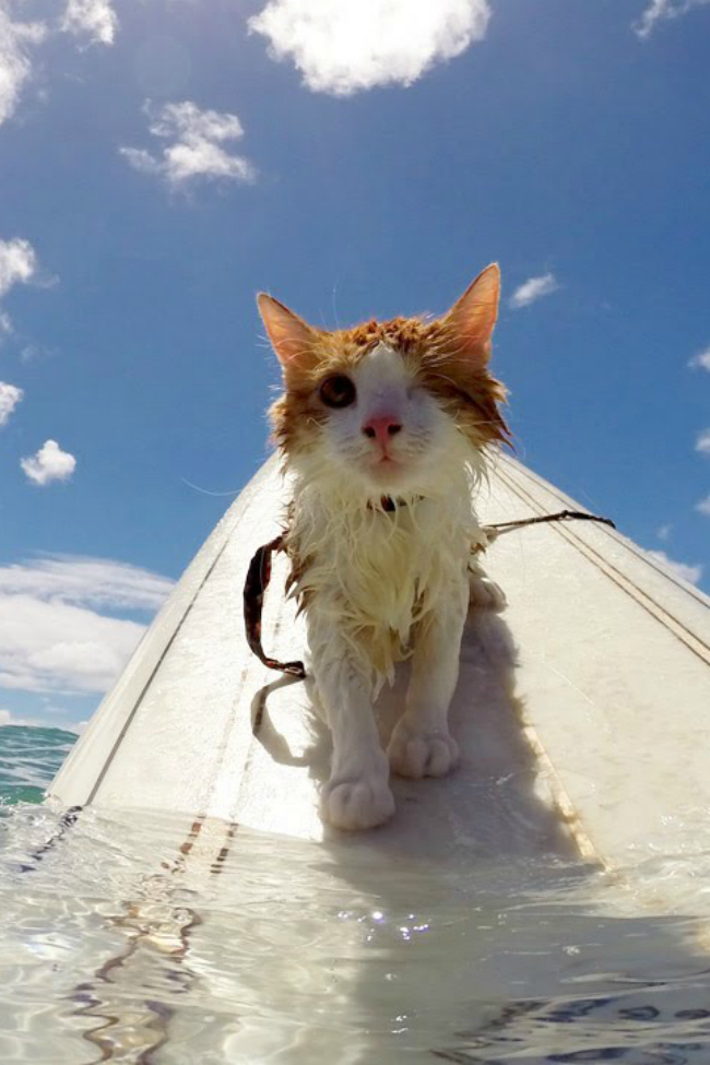 surfing one eyed cat
