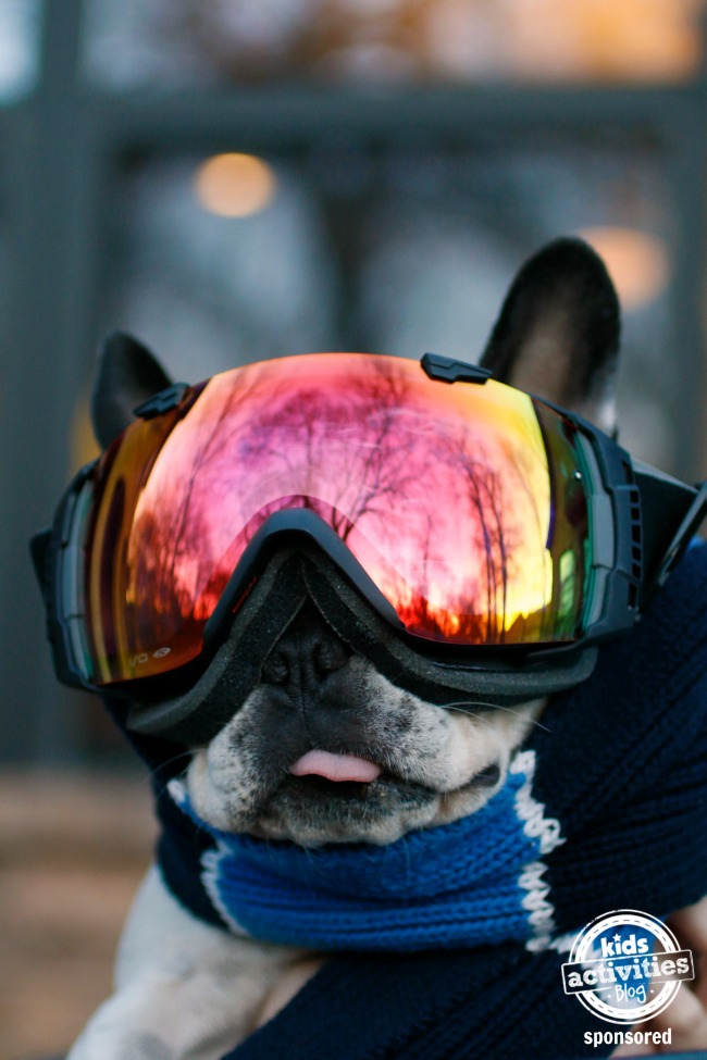 dog wearing ski goggles from AC Lens