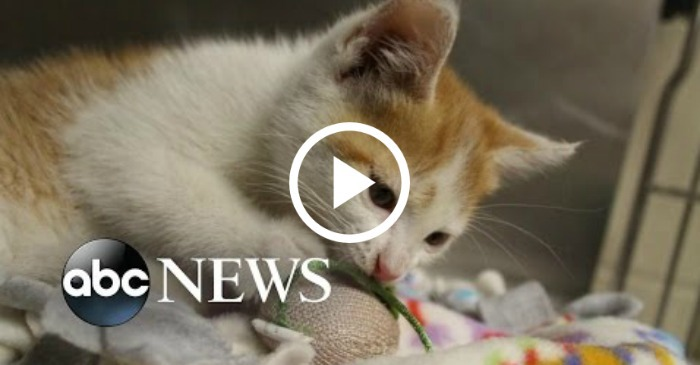 kitten crashes news
