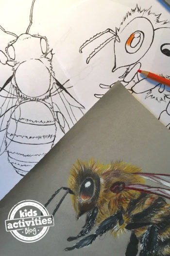 Two bee coloring pages - 2 uncolored coloring sheets and finished honey bee
