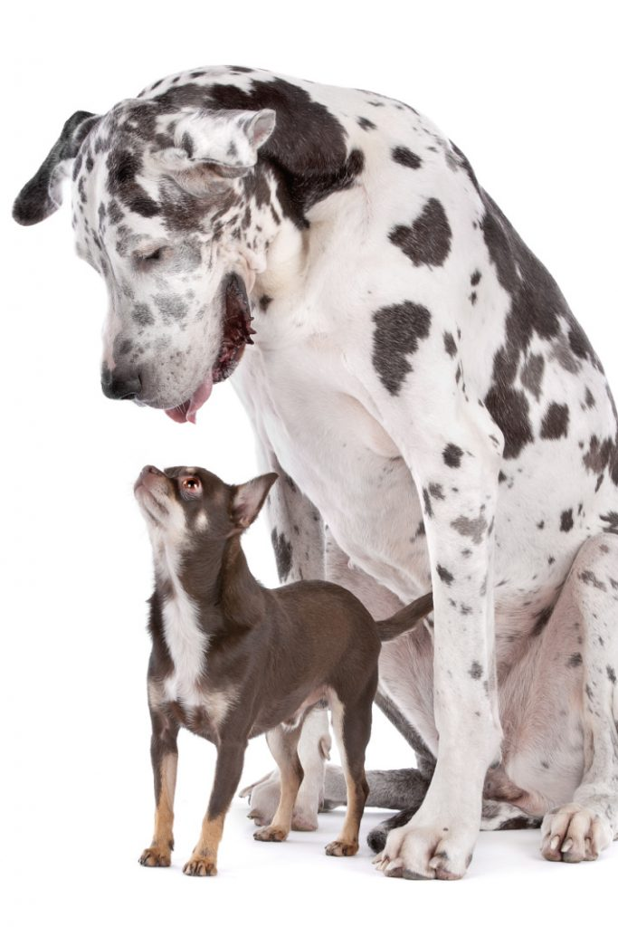 big dog and little dog video - Kids Activities Blog