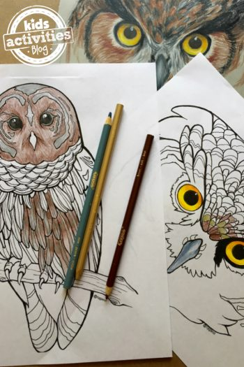 Owl coloring pages for adults and kids with tutorial from Natalie